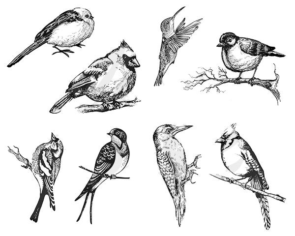 Small Birds DSS0108