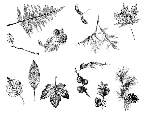 Leaves DSS0111
