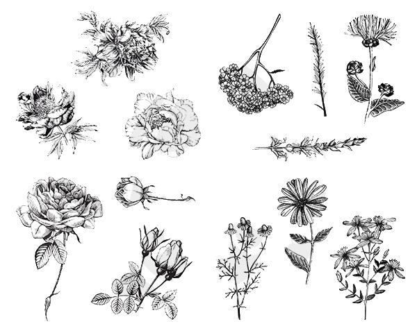 Flowers DSS0112